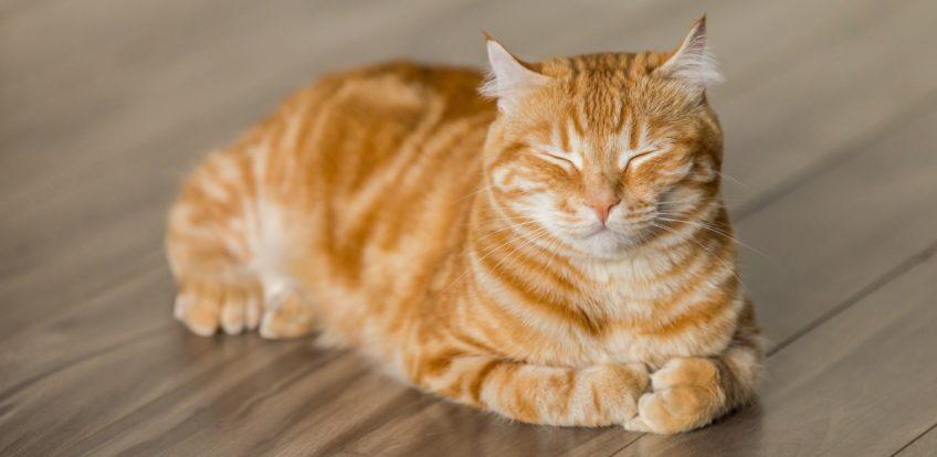 Vælg din kattepension med omhu