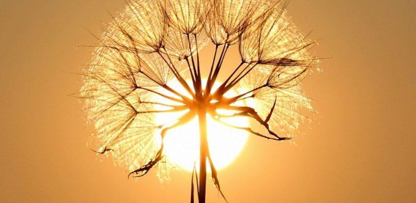 Solpaneler: Er de umagen værd?